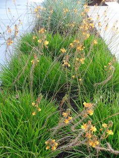 Path through drought tolerant meadow garden with little - The well tended perennial garden ...
