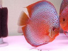 http://www.facebook.com/AquacultureExperts