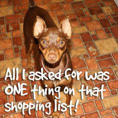 Don't get the puppy guilt trip. Remember to pick up your dog's favorite treats from Pet Supplies Plus!