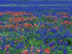 Bob Jensen's Wildflowers in Texas Favorites