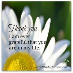 It's important to appreciate the people you care about. READ MORE: http://gratitudehabitat.com/gratitude-to-the-people-we-care-about/  #Thank-you-quote #gratitude