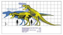 Tyrannosaurus rex-1.svg