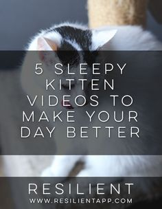 5 Sleepy Kitten Videos to Make Your Day Better #cute #happy