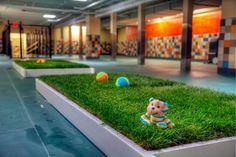 Pooch Hotel in Dallas features indoor grass