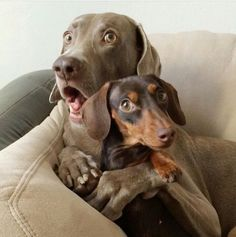 TOP 38 Funny Dogs Pictures | Funny Dog | DomPict.com