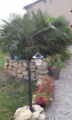 Pourpier multicolore, Datura Metel, au pied des palmiers