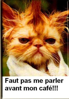 chat grincheux. #drole #humour #mdr // www.drolementvotre.com