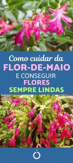 Christmas Cactus, Pet Safe, Plantar, Beautiful Flowers, Succulents, Life Hacks, Herbs, Hydroponic Gardening, Gardening Tips