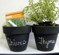 Living Whole Foods K5 1 Indoor Culinary Herb Garden