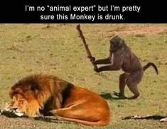 Funny Girl Videos, Funny Girl Fails, Funny Animal Videos, Animal Memes, Funny Animals, Zoo Animals, Memes Humor, Games Memes, Memes Br