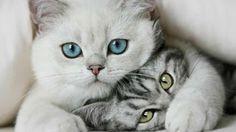 Rimproverare il proprio gatto... ( Aforismi ) ~ Gatto Monopoli