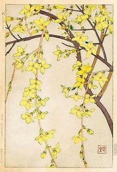 petitpoulailler:    indigodreams:zect-bu:  Kawarazaki Shodo forsythia by ondiraiduveau on Flickr