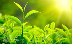 [News]: Η φωτοσύνθεση των φυτών έχει αυξηθεί κατά 30%   http://www.multi-news.gr/news-fotosinthesi-ton-fiton-echi-afxithi-kata-30/?utm_source=PN&utm_medium=multi-news.gr&utm_campaign=Socializr-multi-news