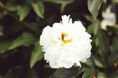 Angelica Blick Angelica Blick, Flowers, Plants, Plant, Royal Icing Flowers, Flower, Florals, Floral, Planets