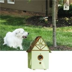 Control your dog's behavior with PetSafe® Outdoor Bark Control. #dogs #petsupplies