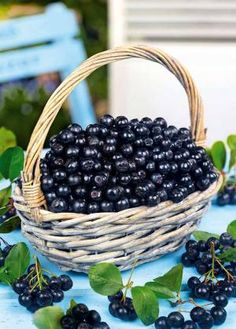 Aronia Berries, juice , berries and  tea, Imported from Poland. www.blackseedbuffet.com