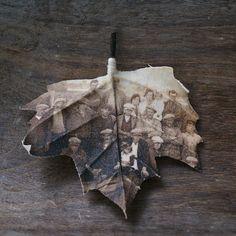 Una foto en un hoja