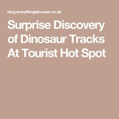 Surprise Discovery of Dinosaur Tracks At Tourist Hot Spot