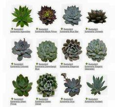 Succulents identifier