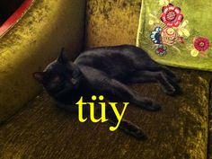 ---------- tüy ---------- tüy dökücü krem tüy gibi  Tüylerim diken diken oldu. ---------- https://www.facebook.com/LaytmotifSprachkalender/ http://www.laytmotif.de Foto: Katze in einem Laden in Galata, Istanbul ---------- Fell, Feder ---------- Enthaarungscreme federleicht Mir standen die Haare zu Berge. ----------