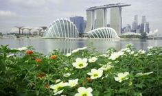 Singapore.    Gardens by the Bay & Marina Bay Sands Hotel   So much to see and do