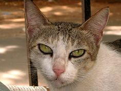 cat - http://www.1pic4u.com/blog/2014/09/28/cat-58/
