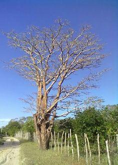 Sertão do Ceará