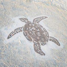 Carpe Diem Liveaboard turtle Sand Art, Carpe Diem, Maldives, Turtle, Animals, The Maldives, Turtles, Animales, Animaux