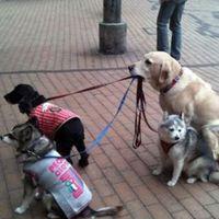 dog holds leashes