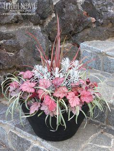 Pink and silver plants: Terra Nova Nurseries®