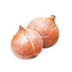 たまねぎスープのパッケージイラスト | 熊本のイラストレーター わたなべみきこ Kumamoto, Onion, Vegetables, Illustration, Food, Onions, Essen, Vegetable Recipes, Illustrations