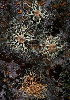David Hall& Encounters in the Sea Gallery: Basket stars employ intricately branched arms to ensnare drifting plankton All Nature, Amazing Nature, Patterns In Nature, Textures Patterns, Art Grunge, Logo Gallery, Natural Texture, Fractal Art, Marine Life