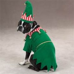 christmas elf dog costume - Otis would be soo mad but it would totally be worth it :)