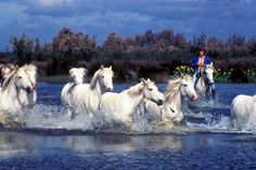 Horseback ride the swamps of Camargue, France. #JetsetterCurator