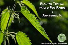 Projecto Naturopatia: Plantas Tónicas para o Pós Parto e Amamentação