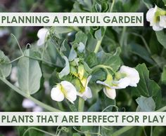 Planning a Playful Garden: Plants that are Perfect for Play