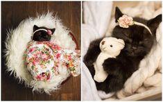 Family Celebrates Kitten With Newborn Photoshoot - Wildlife, Pets - Chat Newborn Puppies, Newborn Kittens, Newborn Pics, Corgi Puppies, Kittens Cutest, Cats And Kittens, Cute Cats, Ragdoll Kittens, Funny Cats
