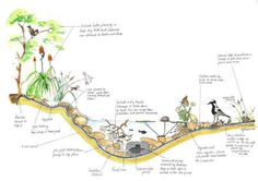 Create your own small pond. A very nice tutorial with South African plants