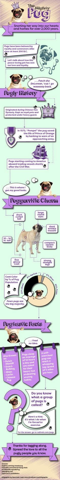 Do you know about pugstory? Learn interesting pug facts every pug mom should to know |Pug Puppies