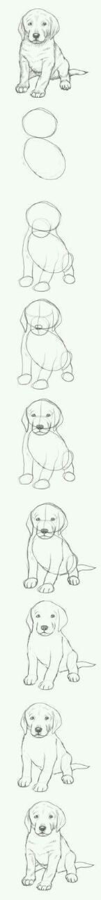 How to draw a puppy. Could be a retriever.