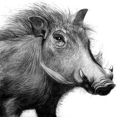 warzenschwein_gross.gif (500×500)