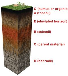 """WHAT IS SOIL? Soils are complex mixtures of minerals, water, air, organic matter, and countless organisms that are the decaying remains of once-living things. It forms at the surface of land – it is the """"skin of the earth."""" Soil is capable of supporting plant life and is vital to life on earth. Soil, as formally defined in the Soil Science Society of America Glossary of Soil Science Terms, is:"""