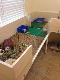 Interior of guinea pig enclosure Fleece and pine bedding Plexiglass windows Separation between males and females