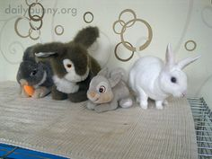 Bunny is a little weirded out by these guys - October 15, 2014
