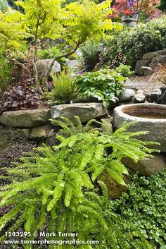 Quail House, Maidenhair Fern, Ferns Garden, Heuchera, Rocks, Landscape, Beautiful Gardens, Ideas, Water