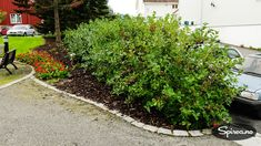 Aronia – hardfør busk som er perfekt til leplanting Plants, Gardening, Lawn And Garden, Plant, Planets, Horticulture
