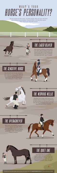 7 Wonderful and Fun Facts About Horses | HubPages