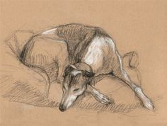 Galgos!  SKETCHES FROM LIFE AT CHEZ GREYHOUND |  ARTIST: Tracie Thompson
