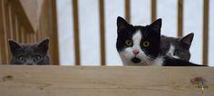 3 Cats Kitty, Cats, Animals, Little Kitty, Gatos, Animales, Animaux, Kitty Cats, Animal