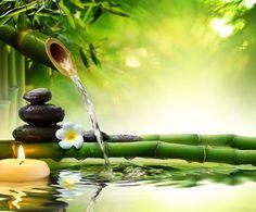 Le bambou en Feng shui, l'art millénaire chinois, est capable de transformer l'énergie de l'environnement, pour laisser fluer les bonnes énergies.